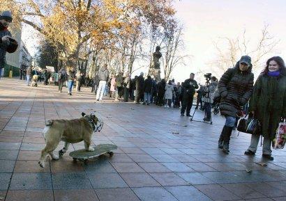 Бульдог-скейтбордист  разогнал Митинг «евромайдановцев» (фото)