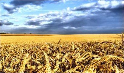 Самый быстрорастущий сектор в Украине – агробизнес