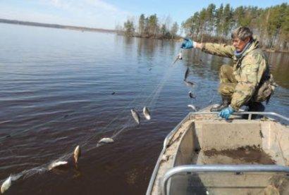 Вылов рыбы в Днестровском заповеднике признан нарушением