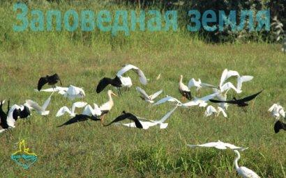 Национальные парки одесской области в опасности!