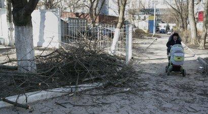 Деревья подрезают — одесситы подбирают (фото)
