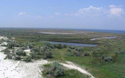Необитаемый остров страдает от перенаселения