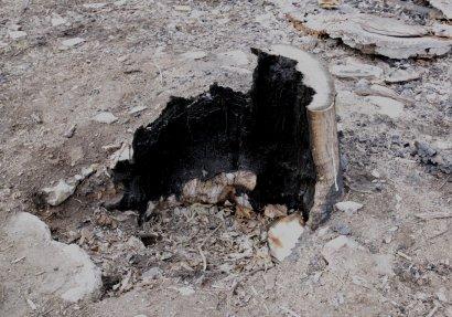 В Одессе сожгли евротуалет (фото)