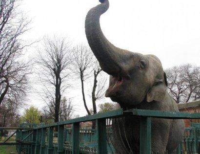 В Одессе женский день отмечается даже в Зоопарке