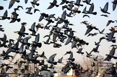 В Одесском порту поселилась «туча» голубей (фото)