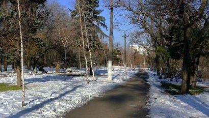 Пруд, зеленые зоны и площадки для собак: каким видят власти Савицкий парк (фото)