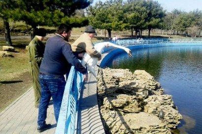 В пруды одесского парка Победы вернулись лебеди (фото)