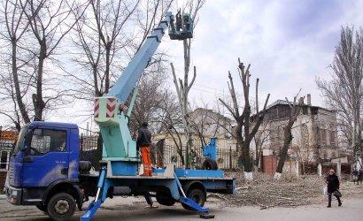 На одесских улицах идут работы по обрезке деревьев