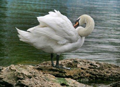Парк Победы — царство птиц!