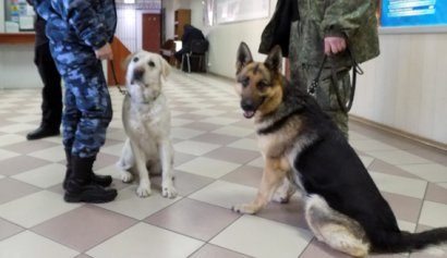 Взырчатки в Киевском суде не обнаружено (фото)