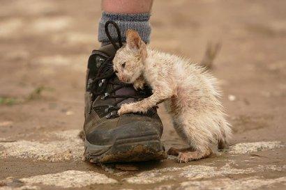 «Закон о защите животных –не «потемкинская деревня» для  матушки-Европы!»