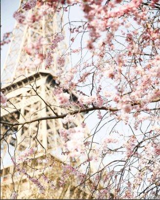 Французская весна в Одессе