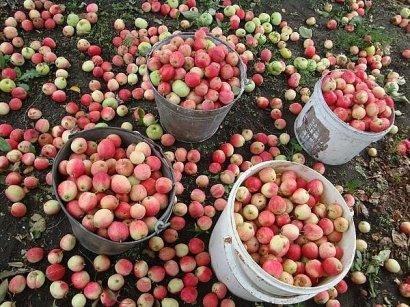 Украина ставит рекорд в яблочно-ягодном экспорте