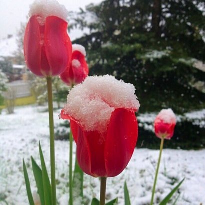 Причуды погоды: апрельский снег в Одессе! (ФОТО, видео)