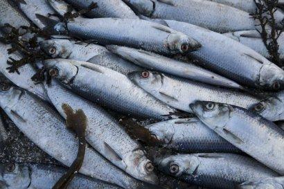 В Шабо гниет несанкционированной рыбная свалка