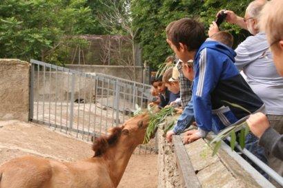 В Одесском зоопарке отпраздновали «День лошади»
