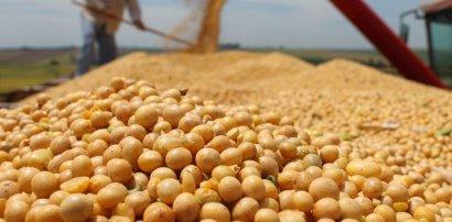 В порту «Южный» будет построено крупнейшее в стране предприятие по переработке сои