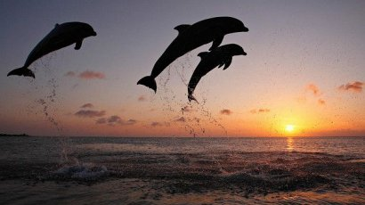 Сразу семь мертвых дельфинов обнаружены в браконьерских рыболовецких сетях