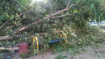 На Таирова упало массивное дерево, травмировав при этом людей
