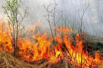 Четыре человека пострадали от возгорания сухой травы в Одесской области
