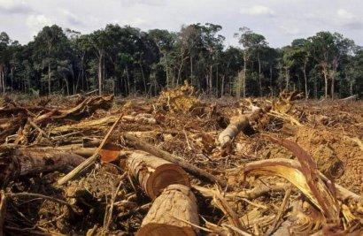 Прокуратура расследует незаконную вырубку леса