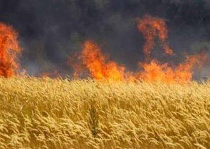 Целое поле пшеницы сгорело в Одесской области