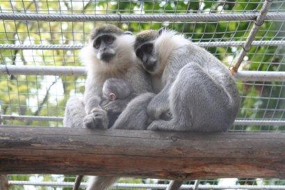 Конкурс «Дай имя малышу» на лучшую кличку для новорождённых питомцев зоопарка