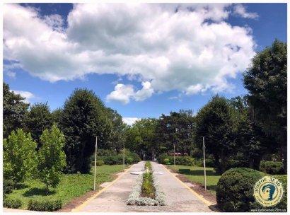 Ботанический сад: «Нет теперь убитого асфальта»