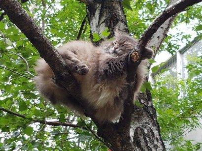 Сегодня - Всемирный день кошек