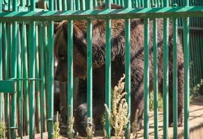 Одесских медведей ждет новоселье