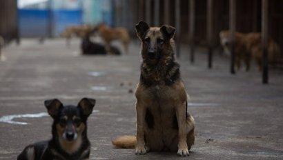 В Одессе будут регулярно проводиться рейды по защите животных