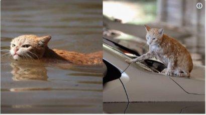 Рыжий кот, пострадавший от наводнения, стал мемом