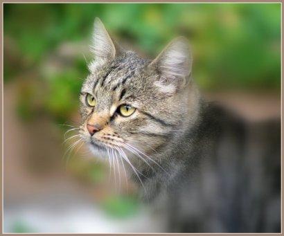 Коты – часть экосистемы Одессы