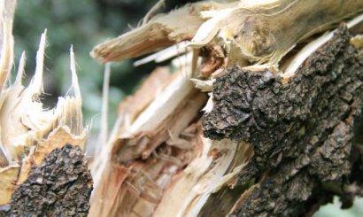 На Академика Глушко дерево упало на три припаркованных автомобиля
