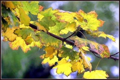 Осенняя Молдаванка