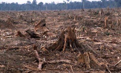 В Одесской области мужчина осуществлял незаконную вырубку леса
