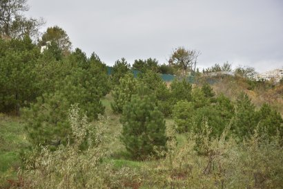 Как в Одессе необходимо правильно укреплять склоны