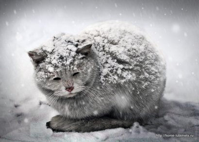 Не дадим котам замёрзнуть: в Одессе оставят открытыми слуховые окна подвалов