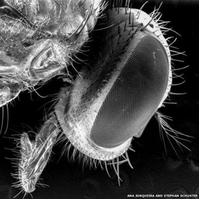 Мухи разносят гораздо больше микробов, чем думали раньше