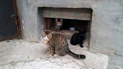 В Одессе нашли способ обогрева бездомных котов. Не все горожане с ним согласны