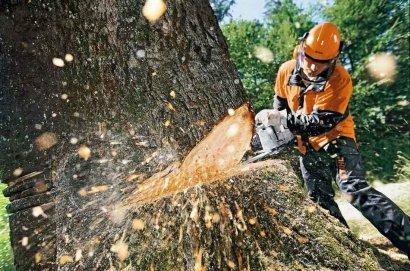 На Фонтане вырубили полсотни вполне жизнеспособных деревьев