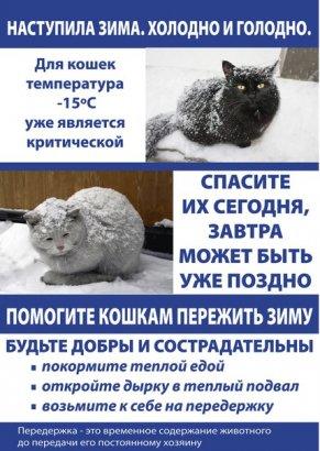 Одесские депутаты взяли под защиту…котов!