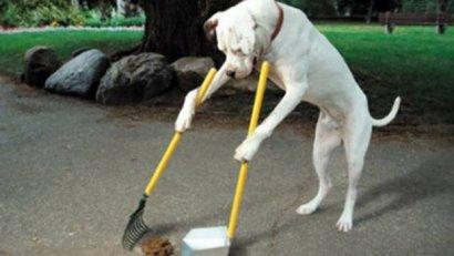 В будущем году на создание площадок по выгулу собак планируется потратить более 1,6 миллиона гривен