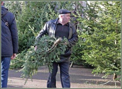Хвойный лес в центре Одессы