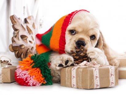 Встречаем год Желтой Земляной Собаки