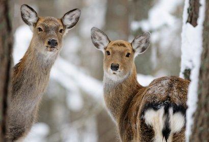Аскания-Нова нуждается в защите от элитных браконьеров!