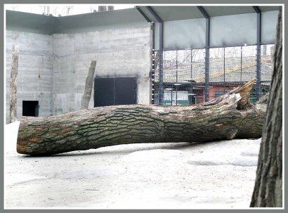 Комфортабельное жилье для одесских медведей
