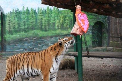 В Одесском зоопарке подвели итоги конкурса «Пара года-2018»