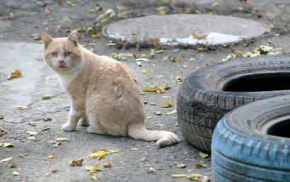 В Одессе утверждена новая программы защиты животных