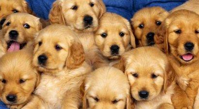 В год Собаки возможно все
